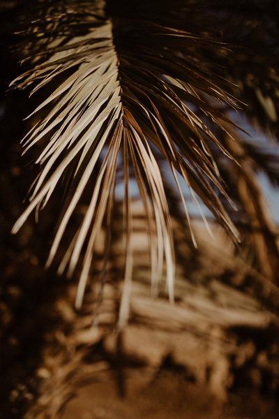 desert agafay